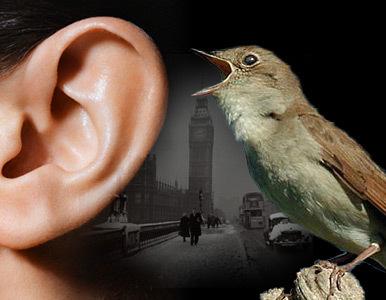 Escuchar-inesem