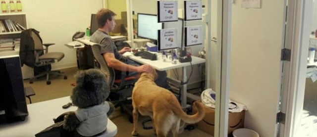 dog-friendly-compaies (1)